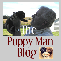 The Puppy Man Blog